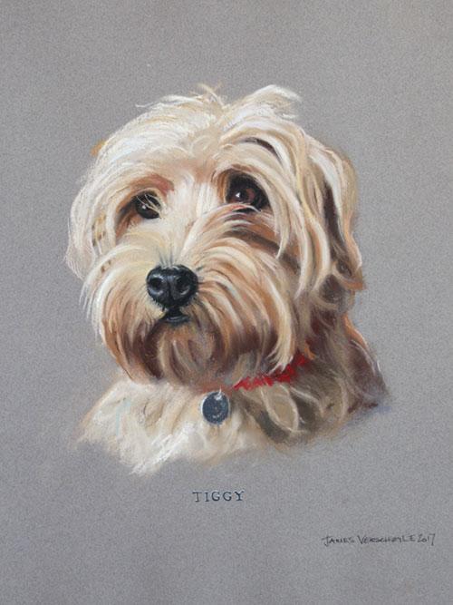 Tiggy-500